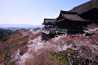 kiyomizu sakura.jpg